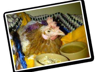 Purple Bonnie lying with bowls